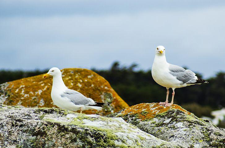 The brief: biodiversity crisis