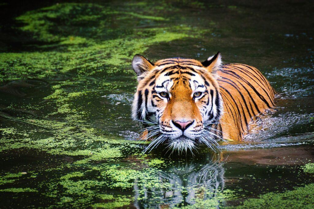 Ecosistemi naturali: declino pericoloso della fauna selvatica a livello globale