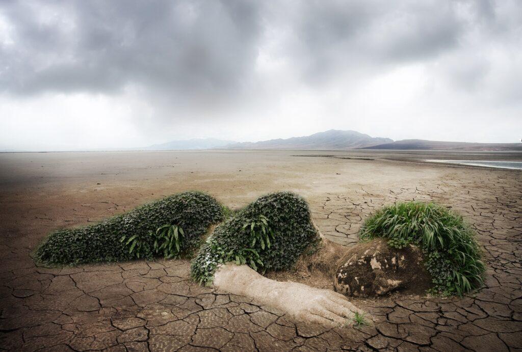 L'Arte ambientale: un trend sostenibile che va promosso