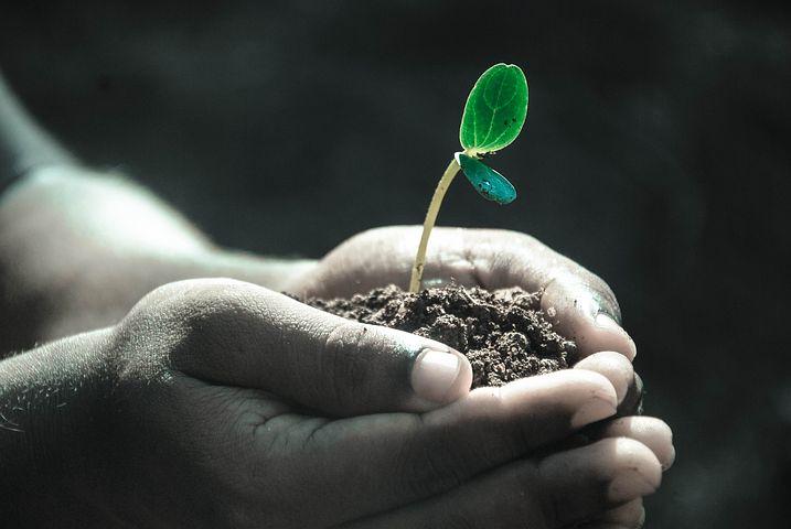 Soil Biodiversity loss