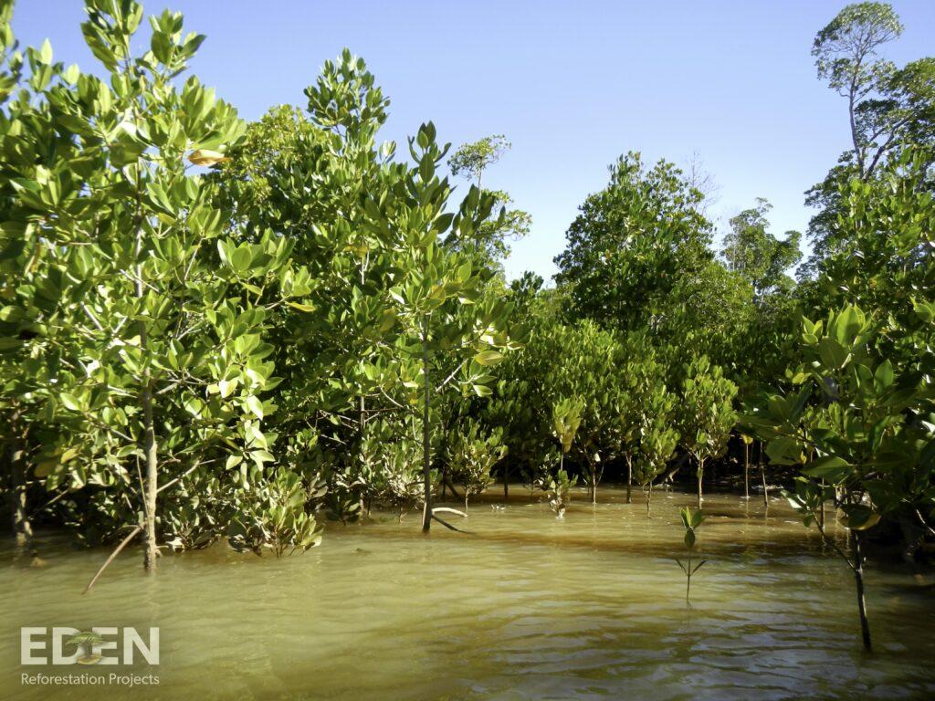 BizAway pianta quasi 60.000 alberi di mangrovia