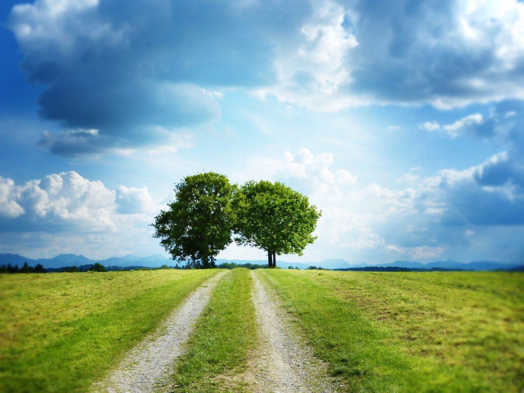 Come affrontare la transizione verde