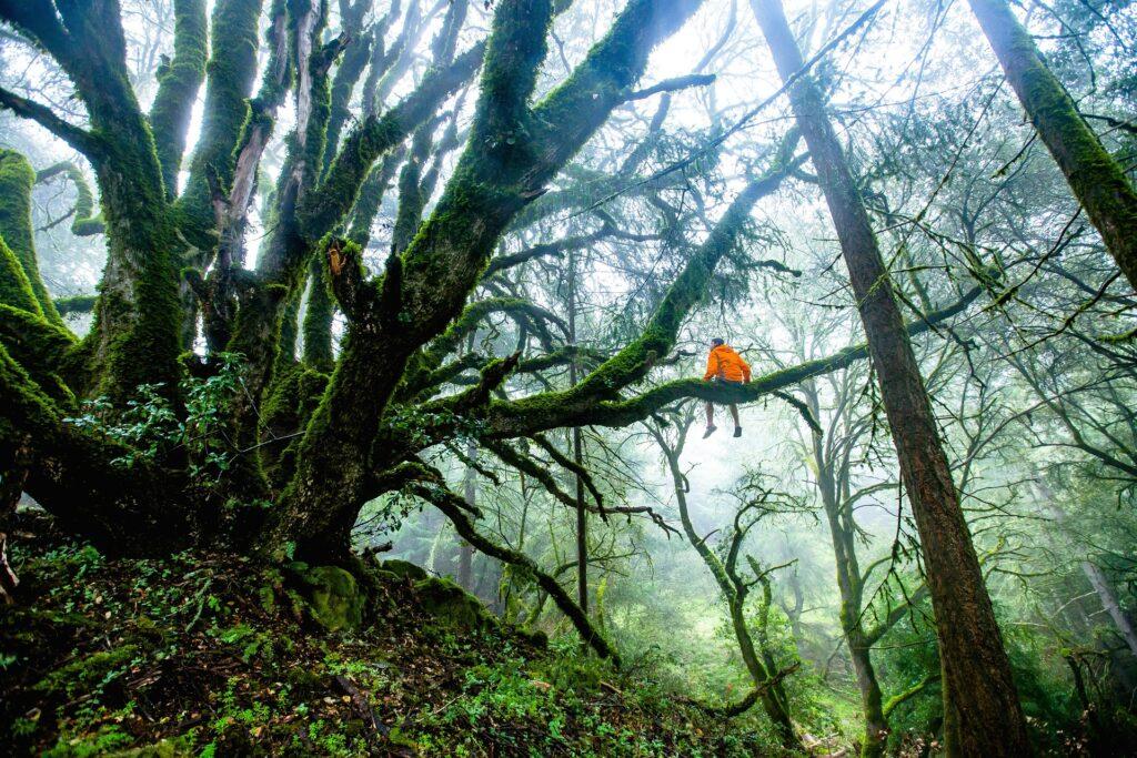 """Foreste tropicali: ogni cittadino dei Paesi del G7 """"consuma"""" 4 alberi l'anno"""