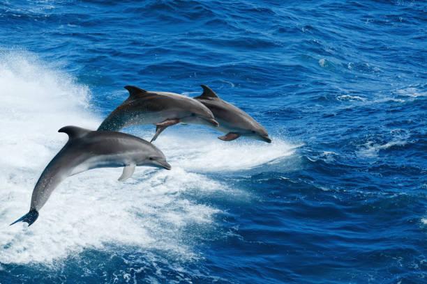 Progetto Mediterranea e ISPRA insieme per il Mare