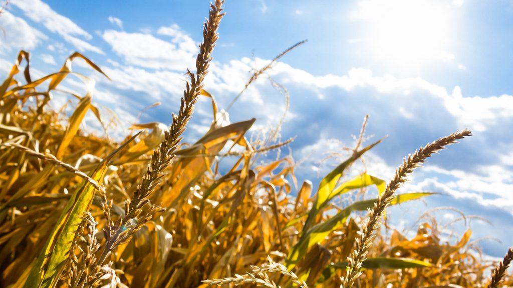 Siccità: la natura «taglia» gli allevamenti intensivi e agisce prima dell'uomo