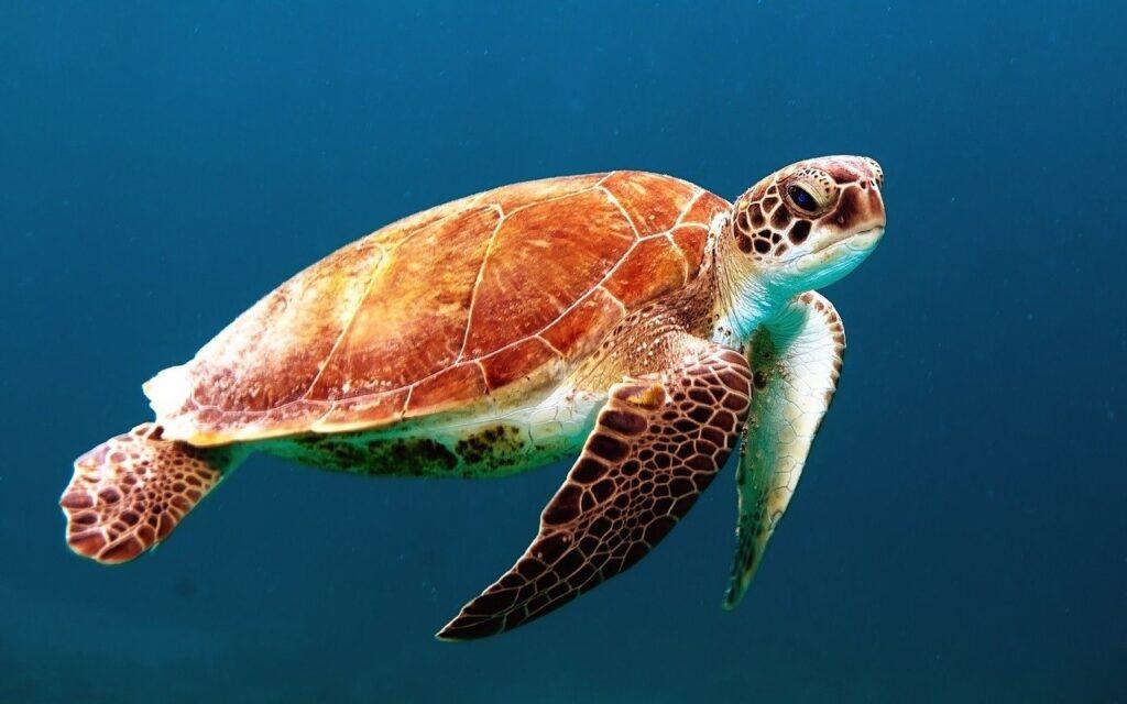 Progetto di ripristino degli ecosistemi marino costieri