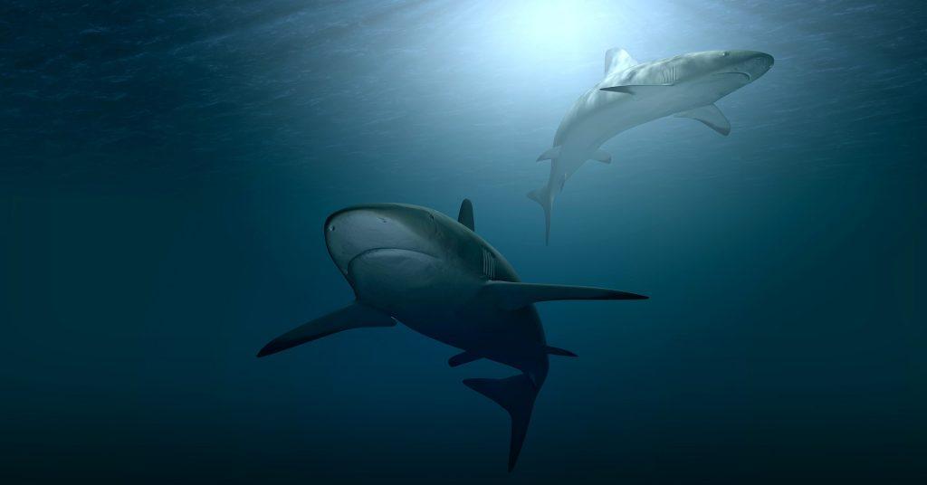 Shark Week 2021: gli squali sono fondamentali per la salute degli oceani ma la loro sopravvivenza è fortemente a rischio