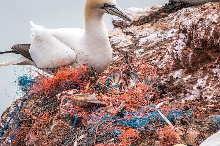 Reti e attrezzi da pesca abbandonati sono una minaccia per la biodiversità