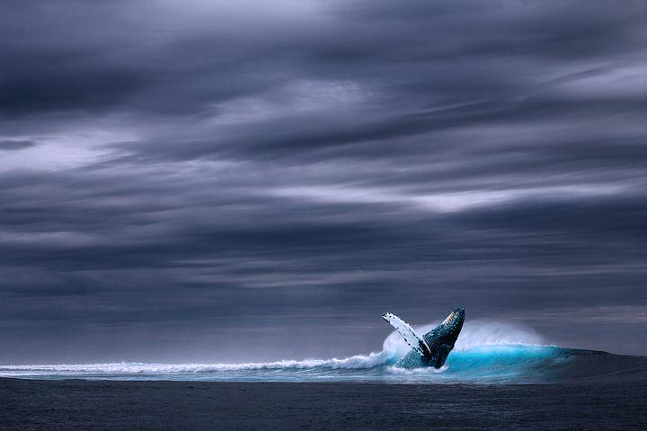 Mattanza di cetacei e tradizioni