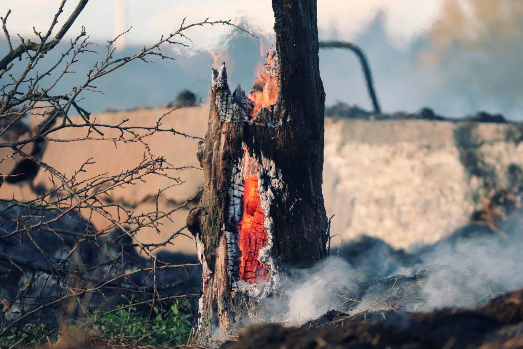 Siccità e cambiamenti climatici: come prevenire gli incendi e curare i territori, ripartendo dalla Sardegna